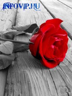 http://www.infovip.hu/datastore/user-files/3307/Red_Rose.jpg